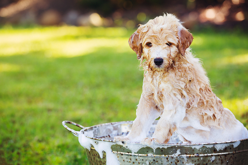 Puppy-Outside-in-the-Yard-Taking-a-Bath